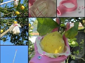 Предмет для сбора фруктов